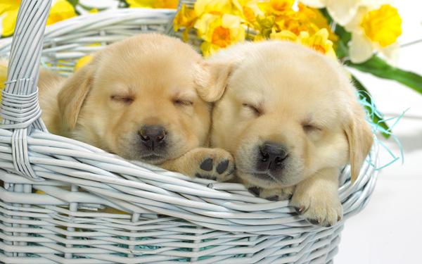 你知道你家狗爱睡觉的秘密都有哪些吗