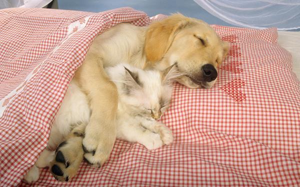 购过特别爱睡觉是为啥